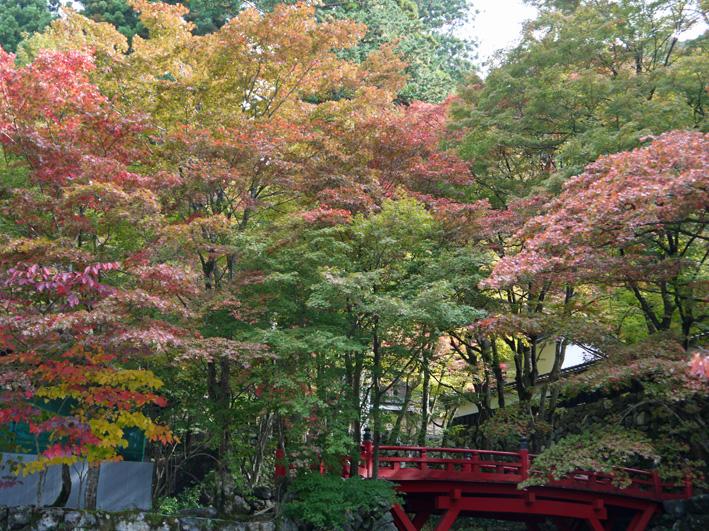 華厳寺に発願の成就を報告:団塊サミットin Gifu 2013③_c0014967_13553148.jpg