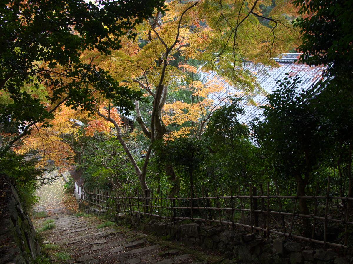 紅葉 2013 <金蔵寺>          _f0021869_0131598.jpg