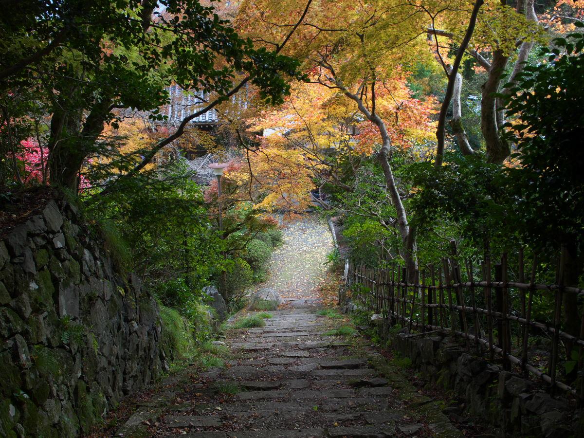 紅葉 2013 <金蔵寺>          _f0021869_0133473.jpg