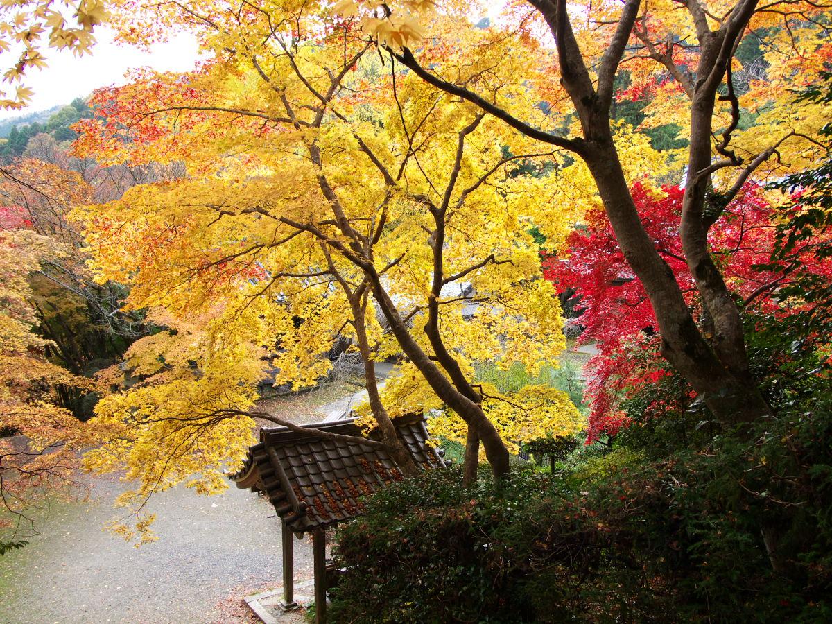 紅葉 2013 <金蔵寺>          _f0021869_01344.jpg