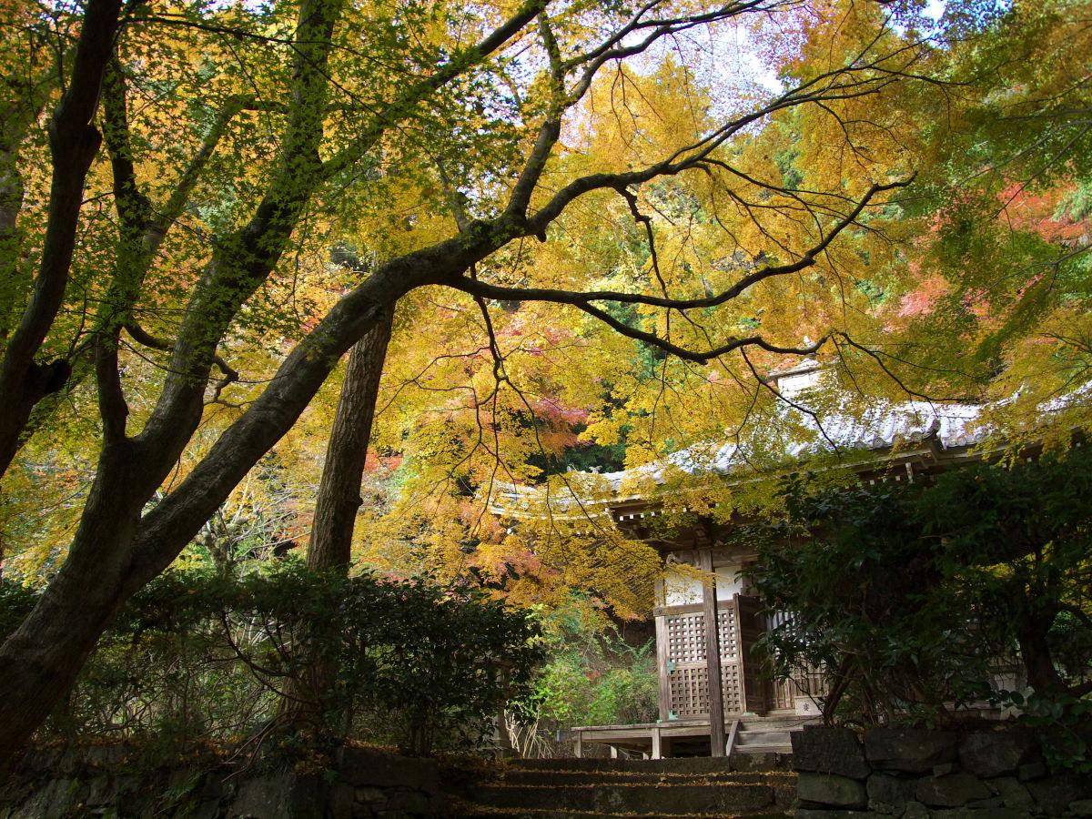 紅葉 2013 <金蔵寺>          _f0021869_0142365.jpg