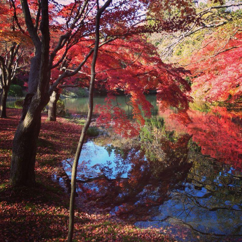 植物園の紅葉とグリルはせがわ_b0277377_8381110.jpg