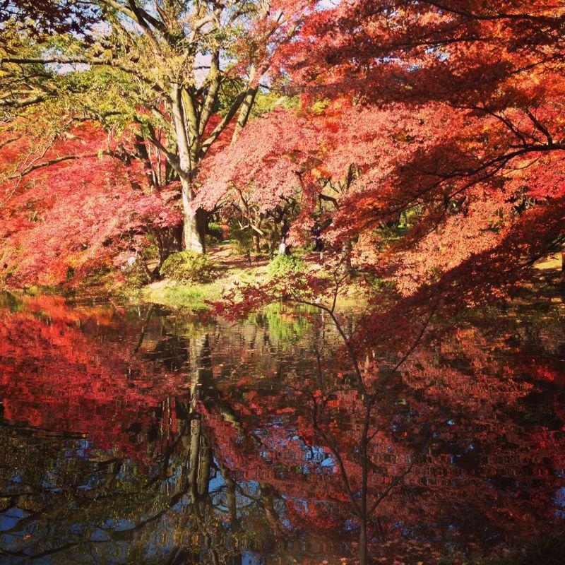 植物園の紅葉とグリルはせがわ_b0277377_8381224.jpg