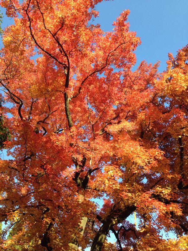 植物園の紅葉とグリルはせがわ_b0277377_8381531.jpg