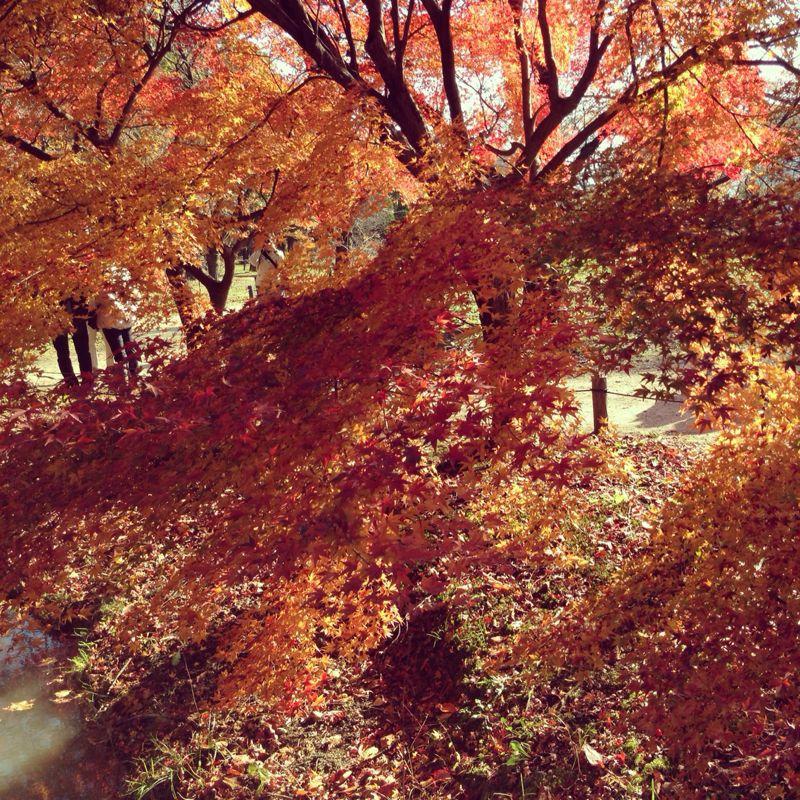 植物園の紅葉とグリルはせがわ_b0277377_838641.jpg