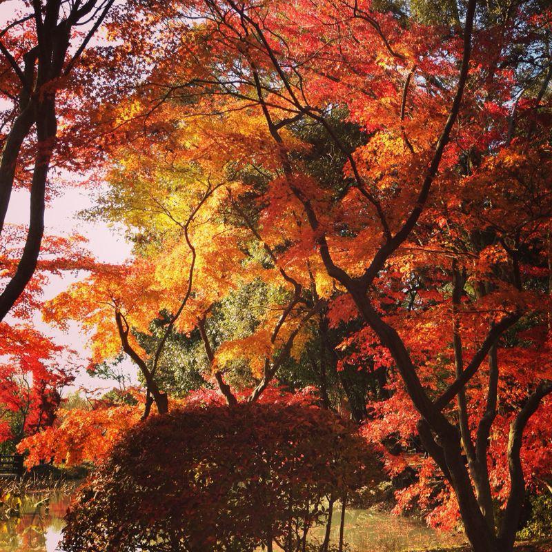植物園の紅葉とグリルはせがわ_b0277377_838923.jpg