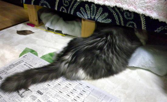 Huu&チョビのこの頃、新聞紙も遊び相手♪ _a0136293_177353.jpg