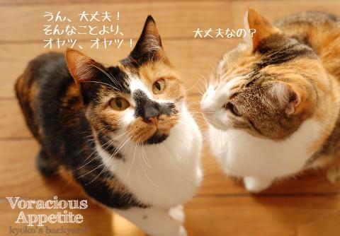 下痢でも、食欲旺盛な猫_b0253205_0275639.jpg