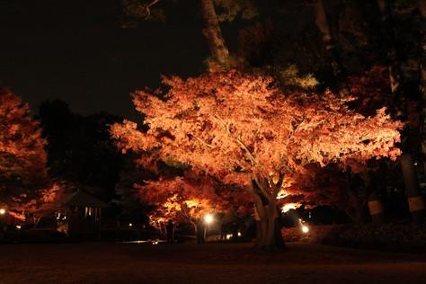【散撮】昼と夜の紅葉_f0141609_20513636.jpg
