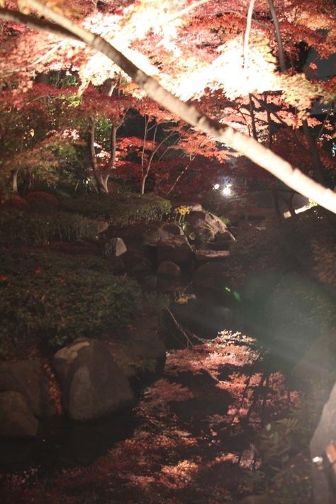 【散撮】昼と夜の紅葉_f0141609_20514182.jpg