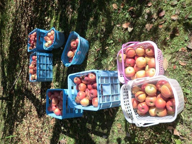 川場のリンゴ狩り_c0072816_746750.jpg