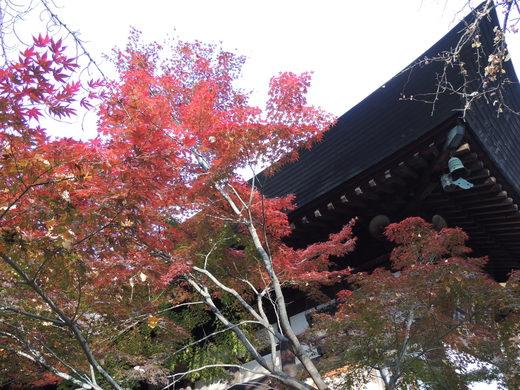 そうだ、京都行こう・・。_d0286718_21202795.jpg