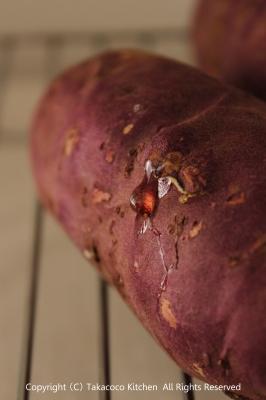 かぼちゃの角食で、にんじんとチーズのサンドイッチ!_a0165538_9541760.jpg