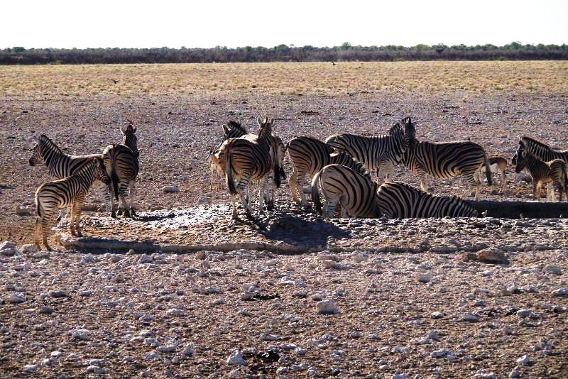 ナミビアの旅(37) エトーシャ国立公園のサファリドライブ(1)_c0011649_0067.jpg