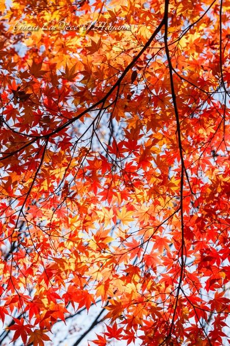 風景の写真 陽の当たる紅葉_b0133053_0165583.jpg