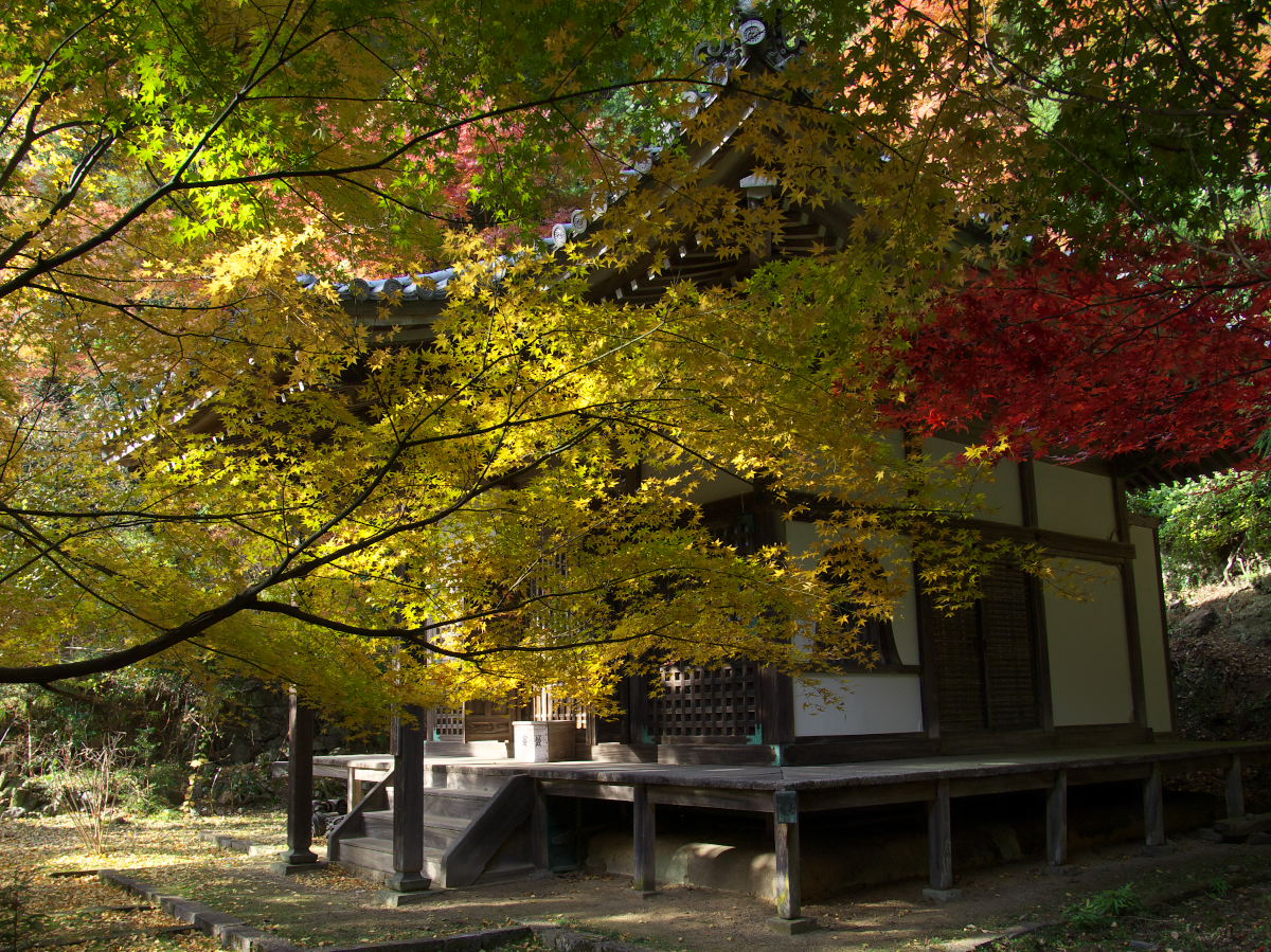 紅葉 2013 <金蔵寺>          _f0021869_23555639.jpg