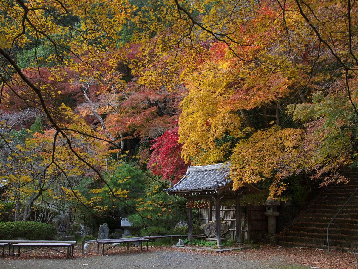 紅葉 2013 <金蔵寺>          _f0021869_23571156.jpg