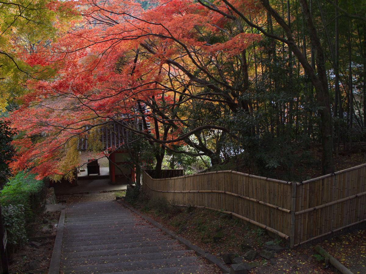 紅葉 2013 <金蔵寺>          _f0021869_23581526.jpg