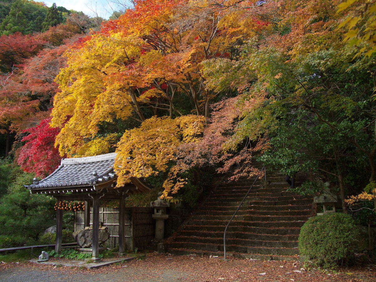 紅葉 2013 <金蔵寺>          _f0021869_2358278.jpg