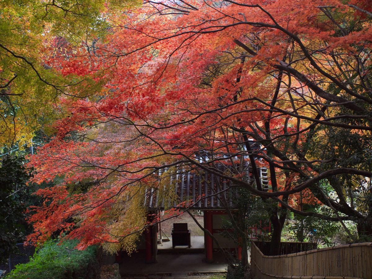 紅葉 2013 <金蔵寺>          _f0021869_23585470.jpg