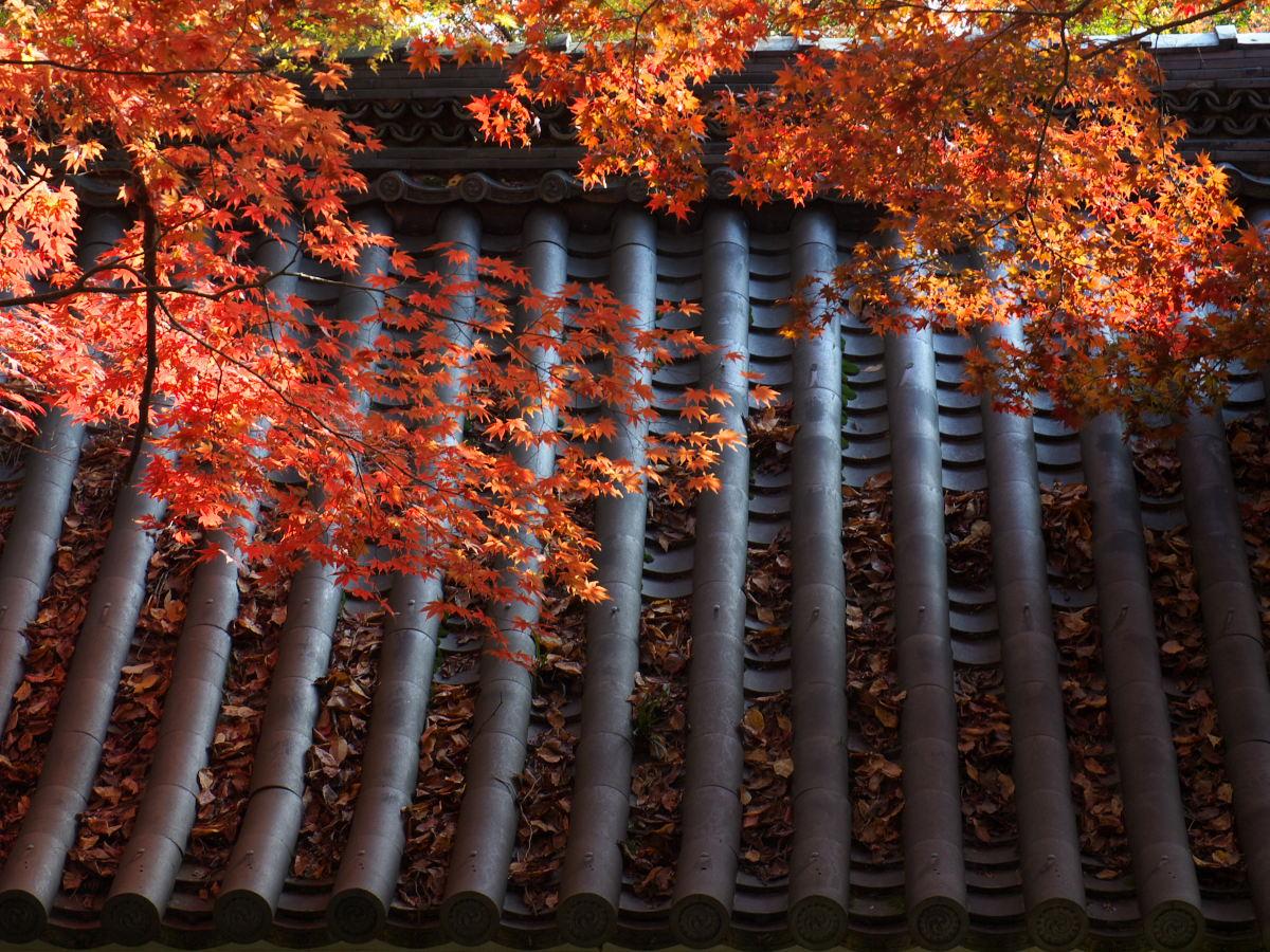 紅葉 2013 <金蔵寺>          _f0021869_23594873.jpg