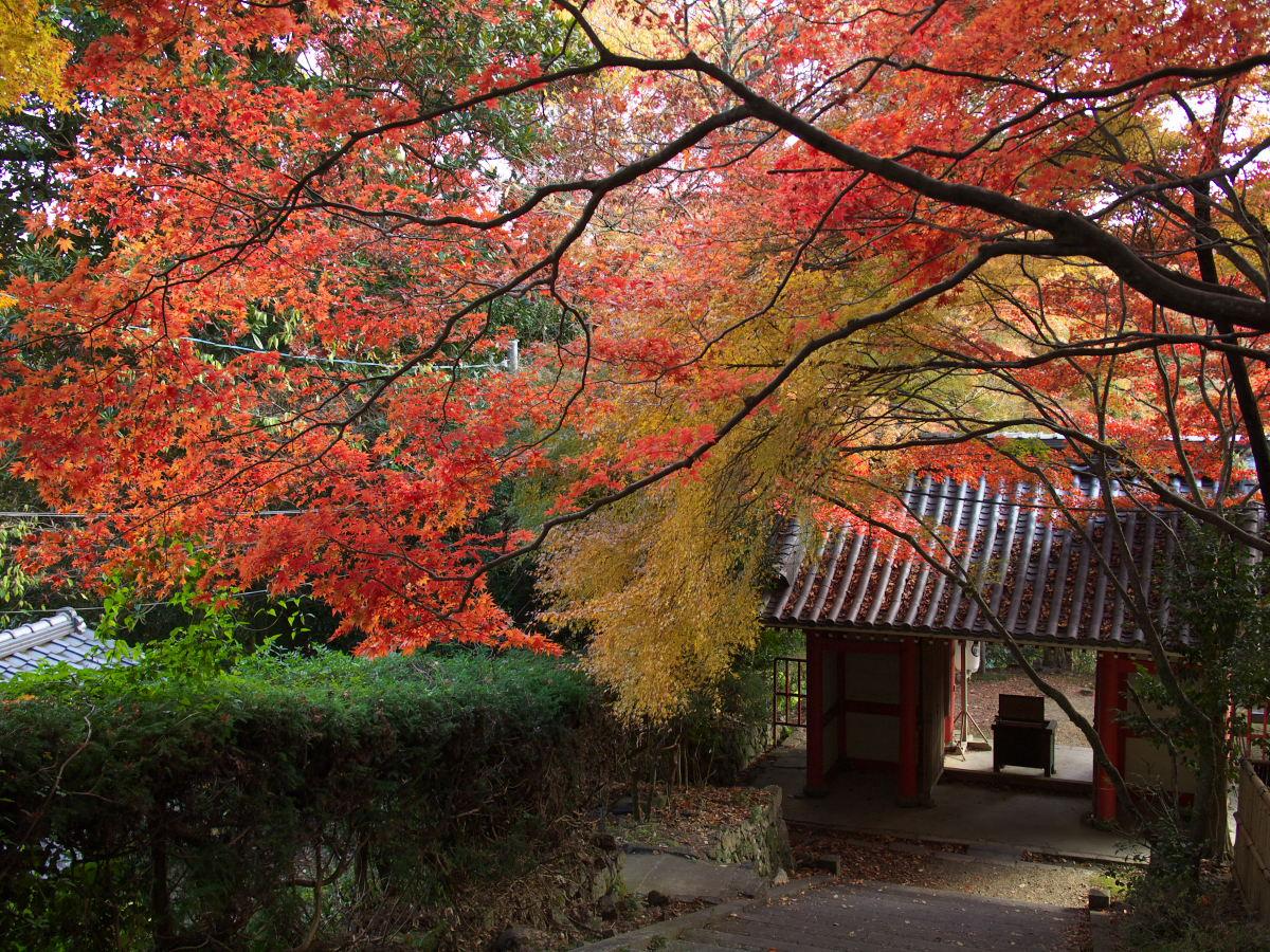 紅葉 2013 <金蔵寺>          _f0021869_2359820.jpg