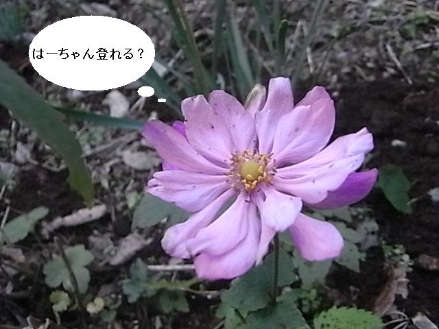 a0146070_5325993.jpg