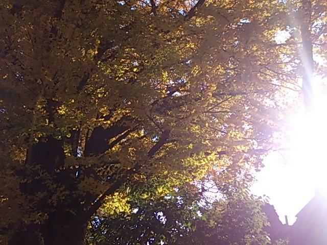 『銀杏が綺麗な千駄ヶ谷』_a0075684_0564492.jpg