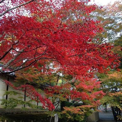 京都旅行_f0220089_18131744.jpg