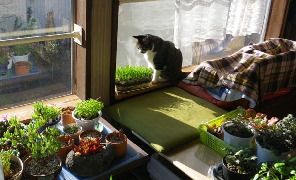 ポカポカ陽気の今日の猫部屋♪_a0136293_17102426.jpg