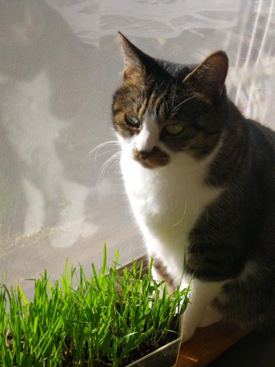 ポカポカ陽気の今日の猫部屋♪_a0136293_1711225.jpg