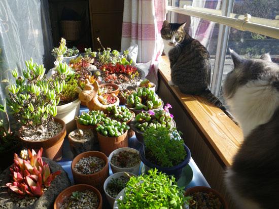 ポカポカ陽気の今日の猫部屋♪_a0136293_17124355.jpg