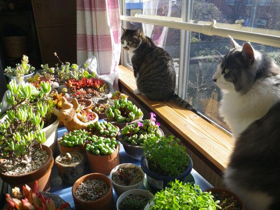 ポカポカ陽気の今日の猫部屋♪_a0136293_1713456.jpg