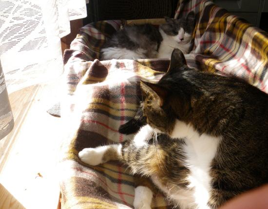 ポカポカ陽気の今日の猫部屋♪_a0136293_1715026.jpg