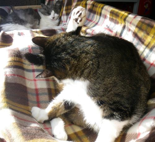 ポカポカ陽気の今日の猫部屋♪_a0136293_17184230.jpg