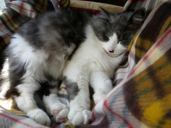 ポカポカ陽気の今日の猫部屋♪_a0136293_17231338.jpg