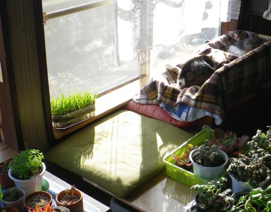 ポカポカ陽気の今日の猫部屋♪_a0136293_17235020.jpg