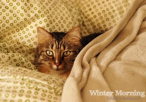 冬の朝の習慣_b0253205_2593425.jpg
