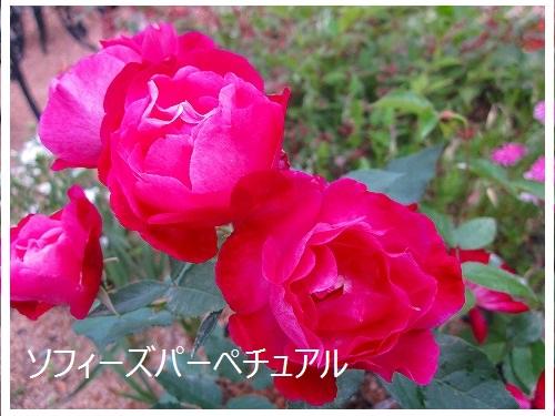 d0172010_9504040.jpg