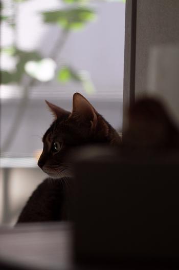 [猫的]少女漫画_e0090124_2248891.jpg