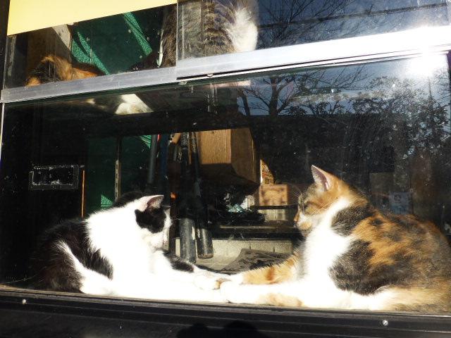 今日も猫日和_e0237625_18403149.jpg