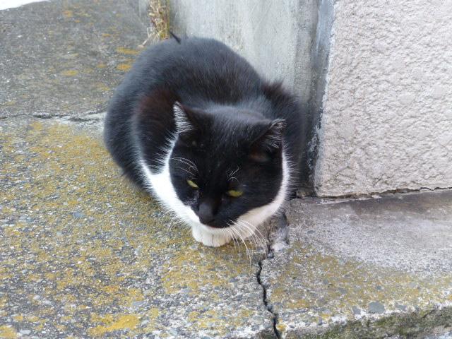 今日も猫日和_e0237625_18431177.jpg