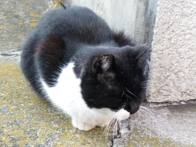 今日も猫日和_e0237625_1846668.jpg