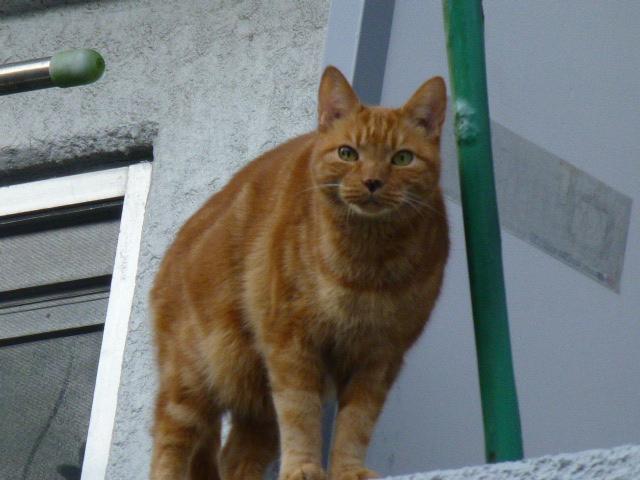 今日も猫日和_e0237625_18501811.jpg