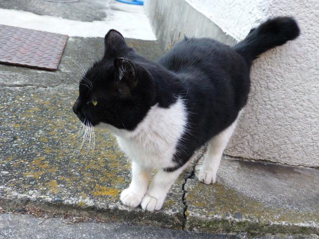 今日も猫日和_e0237625_18561217.jpg