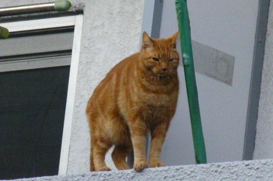 今日も猫日和_e0237625_18574522.jpg