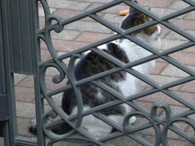 今日も猫日和_e0237625_1901228.jpg