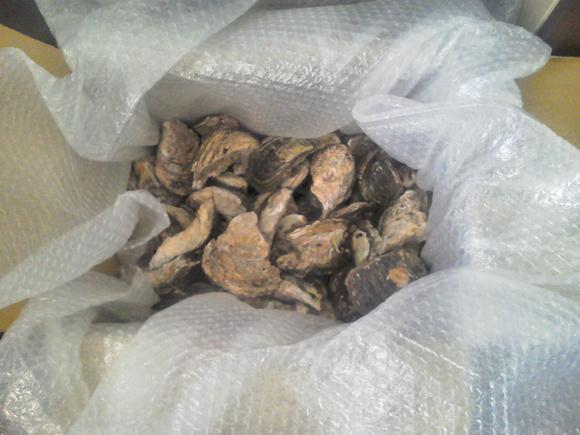 ヨッシー恒例の焼き牡蠣BBQ_a0305128_12475953.jpg