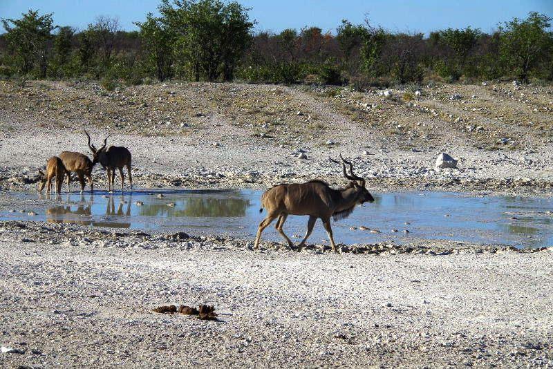 ナミビアの旅(37) エトーシャ国立公園のサファリドライブ(1)_c0011649_0295698.jpg