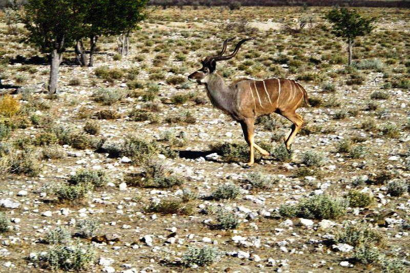 ナミビアの旅(37) エトーシャ国立公園のサファリドライブ(1)_c0011649_0301951.jpg